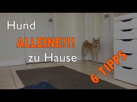 Hund kann NICHT alleine zu Hause bleiben!? | 6 Tipps wie DU das SOFORT änderst!