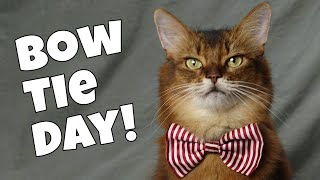 SUMMER'S HAPPY BOW TIE DAY | Cat Wearing a Bow Tie