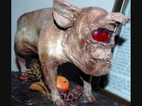 animals creatures strange weird unknown strangest monsters worlds