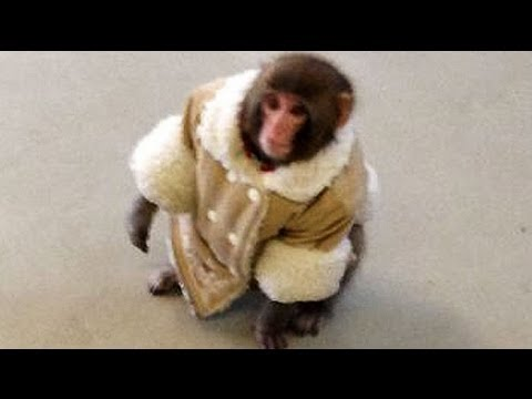Monkey Jacket