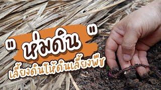 ห่มดิน เลี้ยงดิน ให้ดินเลี้ยงพืช