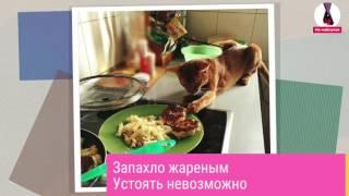 Воришки - кошки и собаки, пойманные на месте преступления