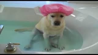 Смешные собаки, Смешное видео о собаках 2018#13