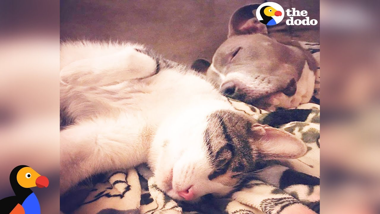 Dog And Cat Best Friends Learn to Love Each Other Despite Their Differences | The Dodo