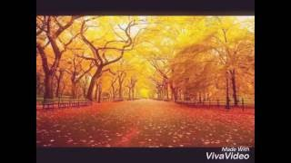 [4.53 MB] autumn orange/AAA