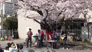 2018年3月31日(土) 吉祥寺南町コミセン『桜まつり』 THE SCREEN TONES ...