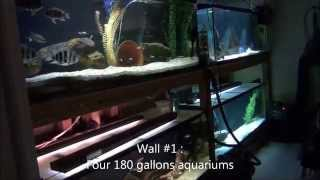 2014-11-16 - My Tanganyika Fishroom 2