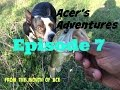 Acers Adventures (Episode 7) - New Place, New Smells, No Goose Poop