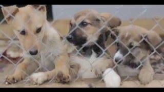 Приют для бездомных животных Актос, г.Актау, Мангыстауская область, Казахстан