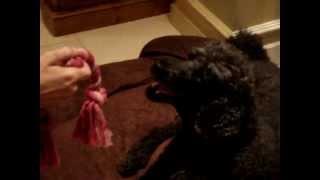 Dog Nation Hates Michael Vick
