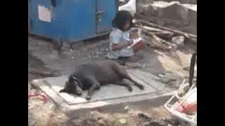 Трущебы в Мумбаи, Индия - Миллионер из трущоб живет здесь, часть 4(20-дневное путешествие по Центральной Индии. Незабываемые впечатления! Мы посетили Дели, Агру (Тадж махал),..., 2014-03-06T15:35:12.000Z)