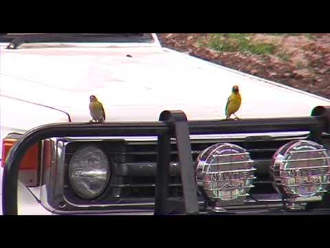 Lake Tanzania birds and Jeep 001