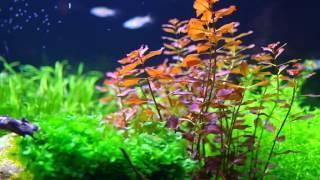 planted aquarium 80x40x40 33 gallon 128 lt