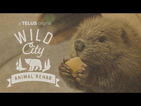 Wild City: Calgary's Animal Rehab