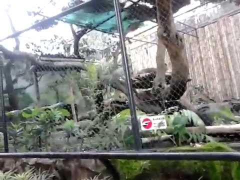 Puma At Batu Secret Zoo Malang Jatimpark 2 Indonesia Youtube