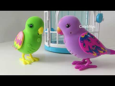 Little Live Pets Bird Cage - Beauty Bella & Silly Billie Talking Birds Review