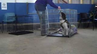 Dogs Trust Bridgend: Rachel Trains Sammy To Enjoy Using His Crate
