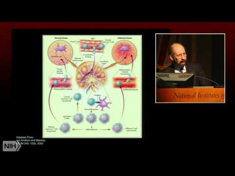Imaging Immunity