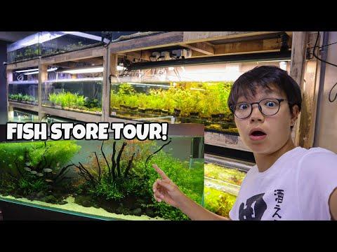 BEAUTIFUL ADA Planted Aquarium Store TOUR! Fishy Business Singapore