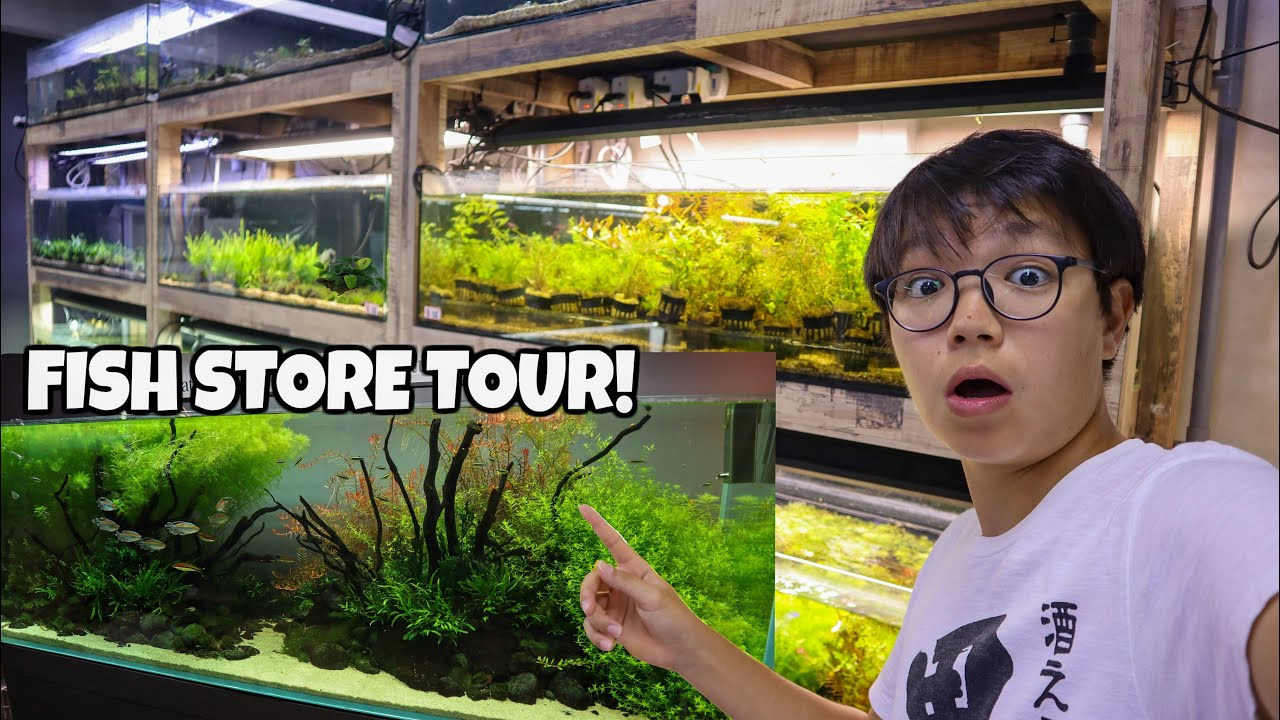 Beautiful Ada Planted Aquarium Store Tour Fishy Business Singapore Youtube
