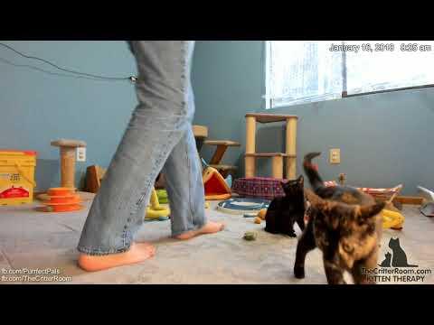 Mew Year's Kittens - Mims Again