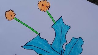 dandelion drawing draw simple yellow
