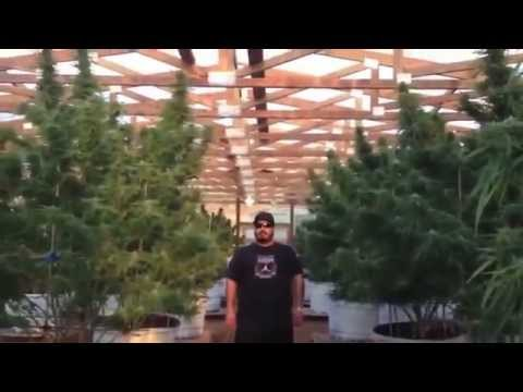 "Motivational Marijuana,  Face your Fear ""100 pound outdoor"""