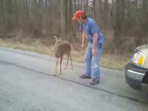No fear deer