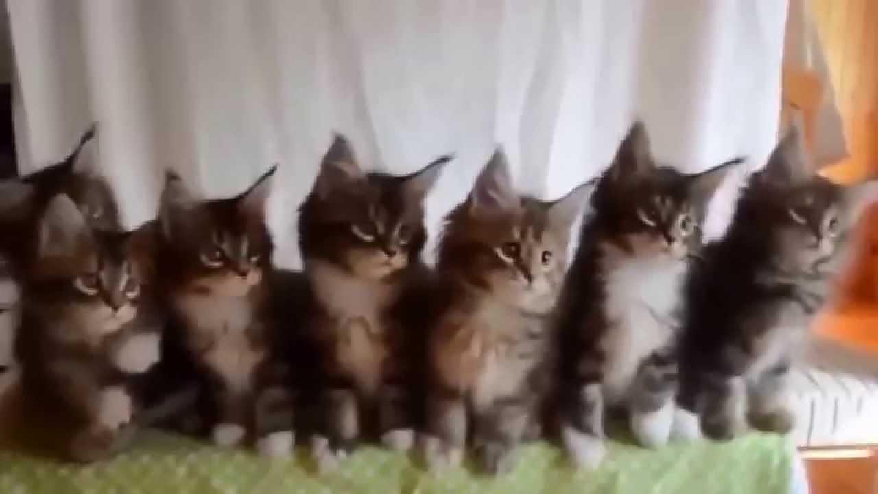 gatos al ritmo wiggle wiggle wiggle!