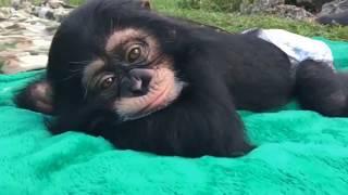 Cute Monkeys Part #14 - Relaxing moment of Baby Monkeys 2018