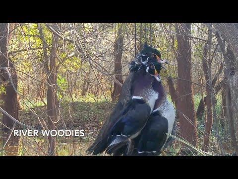 Duck Hunt 2017 | River Wood Ducks