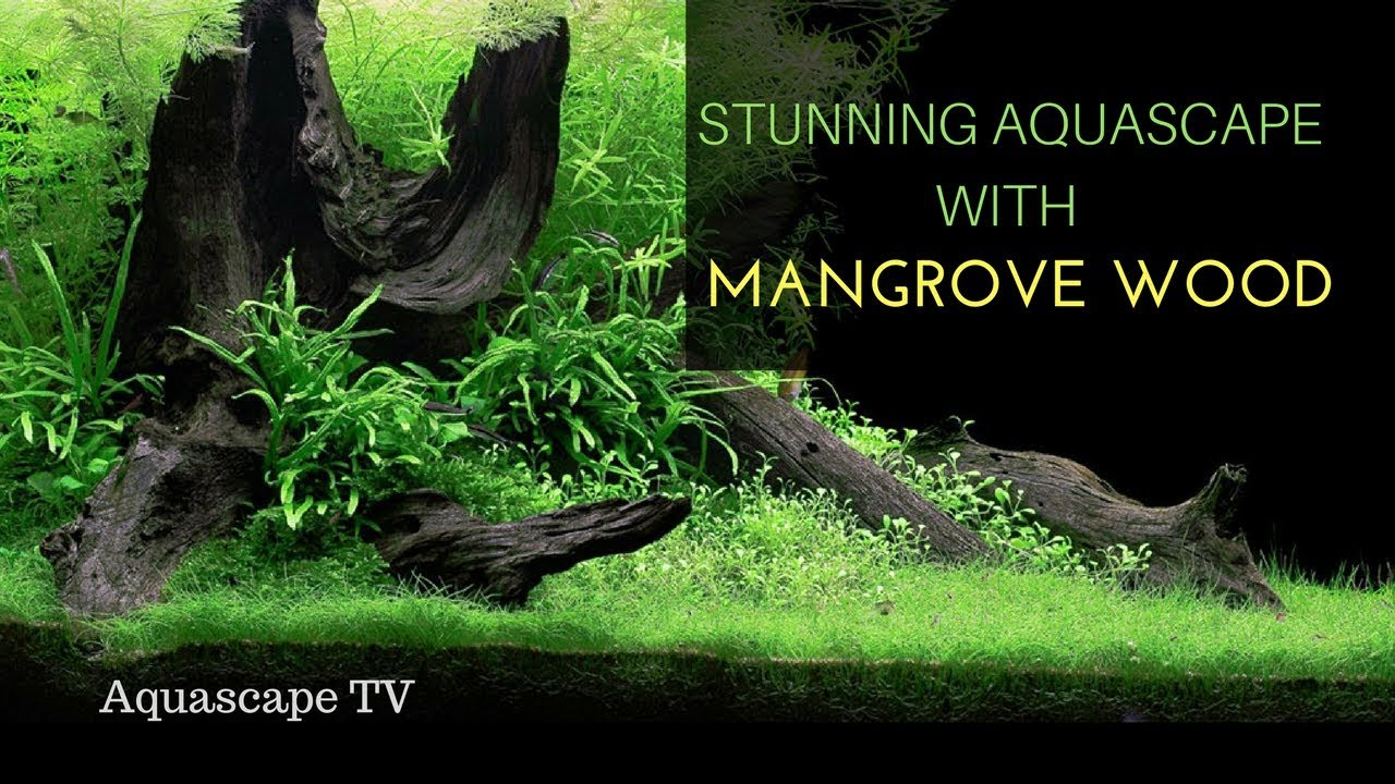 Wow Stunning Aquascape Layout With Mangrove Wood Youtube