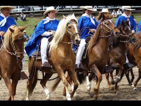 Peruvian Paso Horse Breed