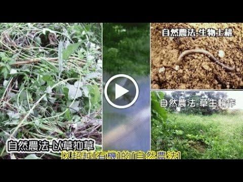 62蔬果穀豆精力粉 3包/1組下標區 (買二送一 特惠實施中)