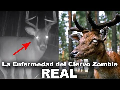Ciervo Zombi - REAL