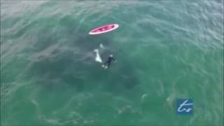Касатка и пловец   Новая Зеландия