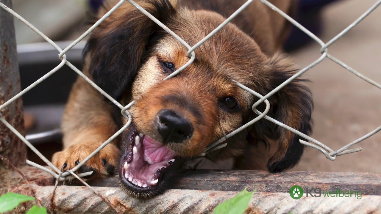 How to Chew Proof an Outdoor Dog Kennel - YouTube