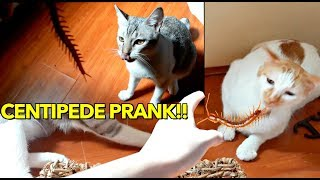 CATS vs. CENTIPEDE!! 😱PRANK time for my FURRBABIES 😂