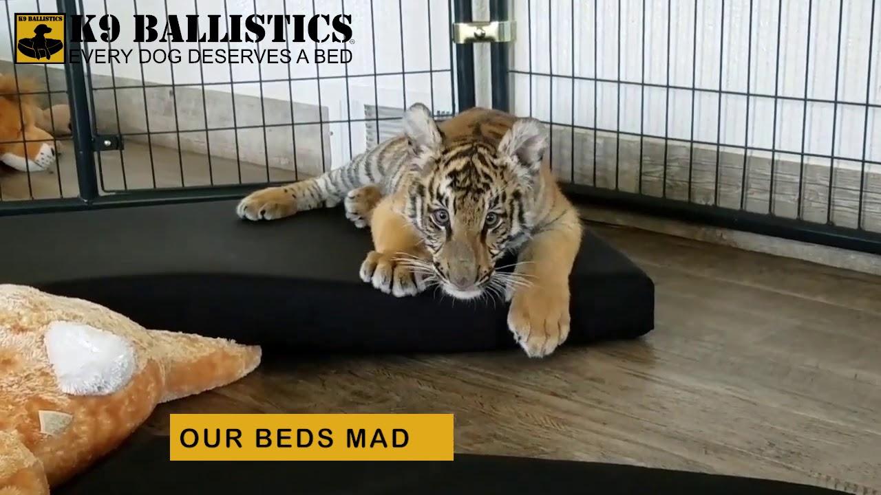 Tiger vs Dog Bed, K9 Ballistics - YouTube