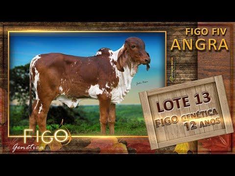 LOTE 13 - FIGO FIV ANGRA - HCFG 1505