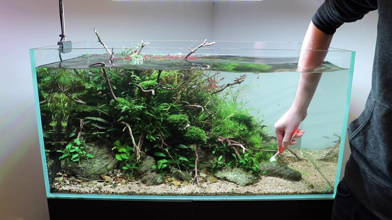 Aquascape Maintenance in Aquarium Gardens Showroom - YouTube