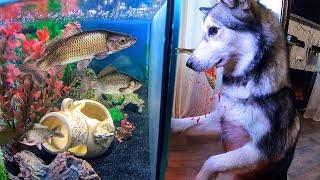 Собака В ШОКЕ! Рыбалка с лодки / ловля карпа и карася на поплавок