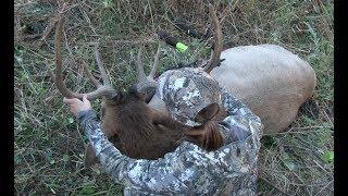 Montana Elk Hunt Part 1 (Girl Kills Elk With Bow)