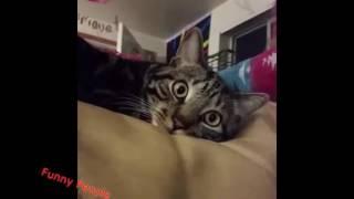 Смешная подборка роликов с собаками, котами и попугаями