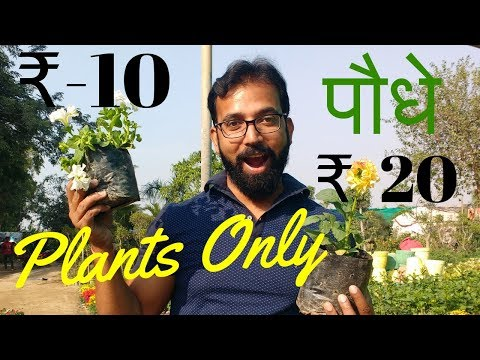 Garden Nursery Plants   Plant and Tree Nursery   Local Plant Nursery Delhi NCR - Kamlesh Nursery