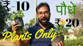 Garden Nursery Plants | Plant and Tree Nursery | Local Plant Nursery Delhi NCR - Kamlesh Nursery