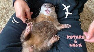 Otter Kotaro&Hana Tickle Tickle