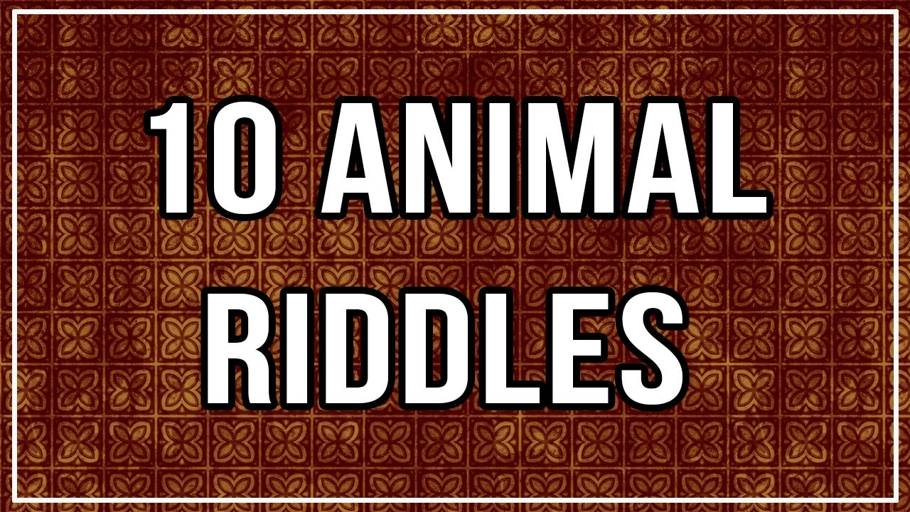 10 Animal IQs and Riddles With Answers