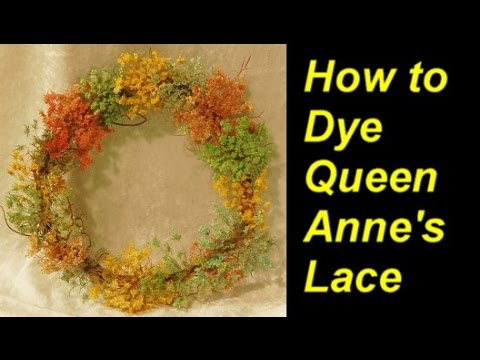 How To Dye Queen Anne S Lace With Food Coloring Youtube