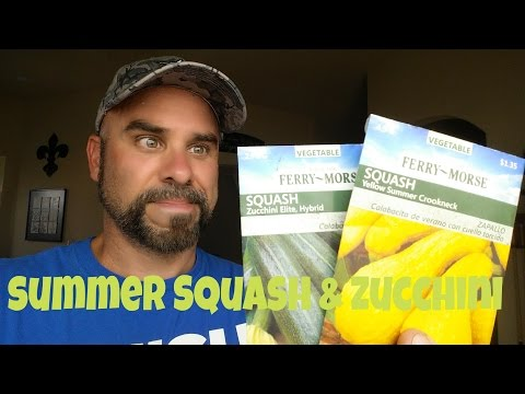 how-to-plant-squash-and-zucchini---hill-method.